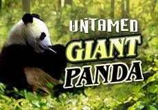 Untamed Giant Panda Slots  (Microgaming) USE PROMO CODE 'LUCKYPUG' FOR 50 FREE SPINS
